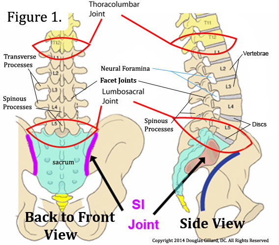 Lumbar disc anatomy